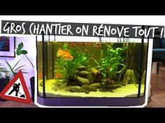 Aquarium Terrarium, Amphibians, Youtube, Youtubers, Combat Boots, Youtube Movies