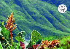 Henri Pittier es el padre de los parques nacionales en Venezuela, el más antiguo y posee una diversidad natural integrada por flora y fauna que hace que toda Aragua se sienta orgullosa, aunque se olvidan que este parque nacional también pertenece a Carabobo y sentimentalmente a todos los venezolanos.