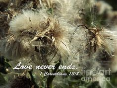 #Thistle In Seed #Print with #quote.