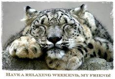 Weekend - Snow Leopard
