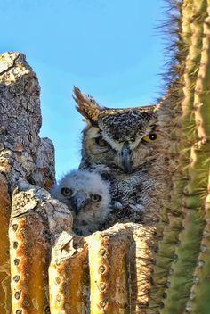 Amazing owls!   -Tis The Season III by Shuttervita
