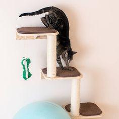 Armarkat Natural Beige Wall-Mounted Cat Scratcher & Climber Cat Tree   cat Furniture & Towers   PetSmart