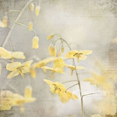 Yellow  Flowers Photograph, yellow and grey wall art, shabby chic print, nature photography, floral , sunny