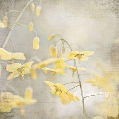 Sunny Yellow Flowers Vintage Photography, shabby chic vintage wall art, baby nursery, floral loft decor photo, grey photo print - 8x8. $30.00, via Etsy.