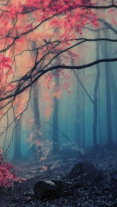 Scenery pink forest iPhone wallpaper