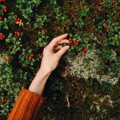 Green Power creates a devoted supply of ecological plant phytochemicals, which advertise overall wellness. Wild At Heart, Red Aesthetic, Aesthetic Photo, Rose Bush Care, Moomin, Acai Berry, Red Green, Green Eyes, Raspberry