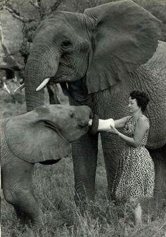 In the beginning - vintage photo of Dame Daphne Sheldrick at The David Sheldrick Wildlife Trust, Kenya.