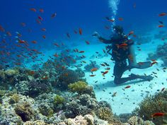 i'm told scuba diving in the Red Sea is a must!