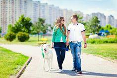 Sapevate che possedere un cane può avere dei benefici sulla salute cardiovascolare delle persone?Può ridurre il rischio di soffrire attacchi cardiaci