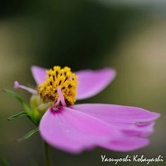 Life is the flower for which love is the honey ... Photo@8270chihaya