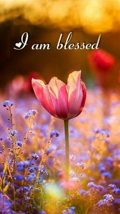 I am very blessed 💖 I have a amazing man and beautiful kids😘 Frühling Wallpaper, Flower Wallpaper, Beautiful Flowers, Beautiful Pictures, Spiritual Inspiration, God Is Good, Christian Quotes, Gods Love, Flower Power
