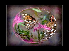 Circle of Life - Butterfly Photomontage, Circle Of Life, Photo Art, Christmas Bulbs, Butterfly, Digital, Holiday Decor, Home Decor, Decoration Home