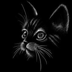Black Canvas Art, Black Canvas Paintings, Black Art, Pencil Art Drawings, Cat Drawing, Art Drawings Sketches, Animal Sketches, Animal Drawings, Black Paper Drawing