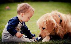 Τι δείχνει νέα έρευνα για τα σπίτια που έχουν κατοικίδιο σκύλο