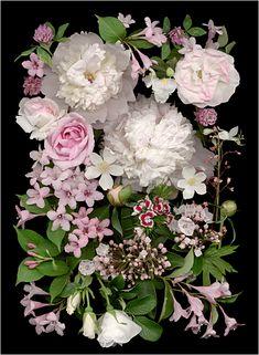 La Vie En Rose, Scanner Photography, scanography, Ellen Hoverkamp, - Scanner Photography By Ellen Hoverkamp