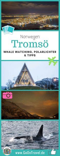 Nordnorwegen im Winter! Es ist die Zeit der Polarnacht, wenn es weder einen Sonnenauf- noch Sonnenuntergang gibt, ganz besonders die Polarlichter. Von Planungen, Hoffnungen, Enttäuschungen und Höhepunkten der Reise lest ihr hier. #Trömso #Norwegen #Polarlichter #WhaleWatchingNorwegen #WhaleWatching