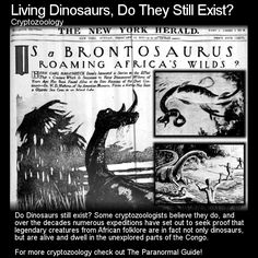Living Dinosaurs, Do They Still Exist? Well many people definitely believe they do having run into some in their travels. What do you think? Head to this link to learn more: http://www.theparanormalguide.com/blog/living-dinosaurs-do-they-still-exist