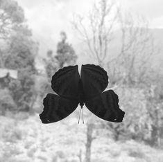 Mariposa en mi ventana Butterfly in my window