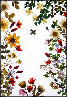 PRINT - Pressed Flower Art Photographed, Bright Floral Colors,.