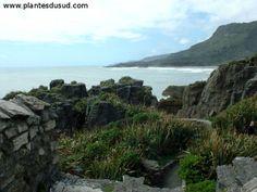 """Nouvelle Zélande, les """"Pancakes Rocks"""". www.plantesdusud.com"""