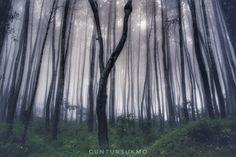 hutan pinus dlingo wonosari, jogjakarta