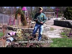 www.Sollecito.com How to tell if a plant is alive or dead, and how to tell if you should keep or scrap plants, shrubs, trees - or anything - in your garden. Landscaping ideas & tips from Sollecito Landscaping Nursery, a Syracuse, NY landscaping nursery. To get advice from a Senior NYS Certified Landscaping Professional on how you can design & create sustainable and affordable landscapes visit http://sollecito.com. #LandscapingIdeas #LandscapingTips #LandscapingDIY