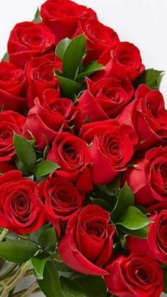 Red roses guide, Select the correct soil to acquire the ideal outcome. You may also make an artificial plot with just one type of soil. Good Morning Beautiful Flowers, Beautiful Flowers Pictures, Beautiful Flowers Wallpapers, Beautiful Rose Flowers, Beautiful Flower Arrangements, Flower Pictures, Amazing Flowers, Pretty Flowers, Red Flowers