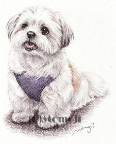 More On Shih Tzu Puppies Doggies Chien Shih Tzu, Shih Tzu Puppy, Shih Tzus, Animal Sketches, Animal Drawings, Dibujos Anime Chibi, Cute Dog Photos, Maltese Dogs, Lhasa Apso