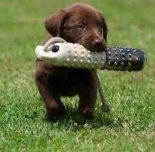 Puppy Training Tips. Someday I will have to give in...