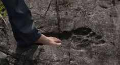While exploring the region near the village of Pingyan, in China, a group of photographers came across a GIANT footprint fossilized in rocks. The massive f