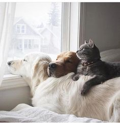 Oddly United Friends Joined Together By NapTime LoL - Tap the pin for the most adorable pawtastic fur baby apparel! You'll love the dog clothes and cat clothes! ♥