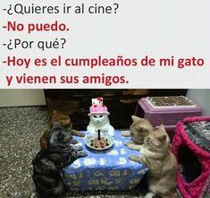 Awwwww,pero que lindoooo Funny Animal Memes, Cat Memes, Memes Humor, Funny Animals, Cute Animals, Funny Memes, Jokes, Animal Humor, Funny Spanish Memes
