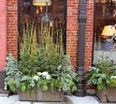 Debra Phillips - 5th and State blog -  Tutorial for planting winter containers