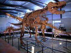 """Si us agraden els dinosaures no us perdeu """"Le musée des dinosaures d'Espéraza"""" #sortirambnens"""