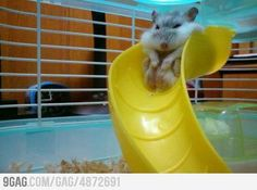 Too fat for fun.    Hehe this is the cutest fat joke! ;)