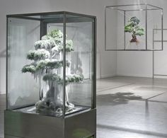 Bonsai trees in unusual situations,  created by Japan-based artist Makoto Azuma: 1 Frozen  & 1 suspended