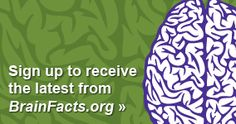 Sign up to receive the latest from BrainFacts.org - this is the first reference site and I gather I am going to become rather familiar with it.