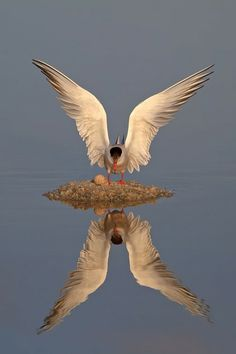 Awesome Reflection Photo.
