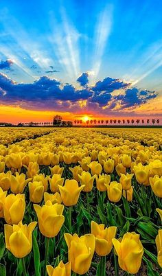 Travel Discover Beautiful Field OF Tulips . Frühling Wallpaper Beautiful World Beautiful Places Have A Beautiful Day Landscape Photography Nature Photography Tulip Fields Field Of Tulips Beautiful Sunrise Beautiful World, Beautiful Gardens, Beautiful Flowers, Beautiful Places, Beautiful Pictures, Frühling Wallpaper, Nature Wallpaper, Landscape Photography, Nature Photography