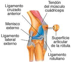 Resultado de imagen para articulacion de la rodilla vista anterior