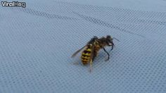 Bee vs. Wasp - you won't believe this crazy outcome