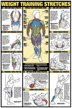 Weight Training Stretches and more. A weight training book of 12 charts featuring: and Two workout posters. Large laminated posters in a & book. Can either be used together or make a great decoration for any home gym. Fitness Workouts, 7 Workout, Fitness Tips, Fitness Motivation, Pre Workout Stretches, Body Stretches, Stomach Exercises, Fitness Memes, Training Exercises