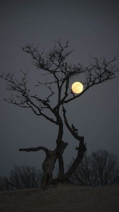 Moon resting on a branch before heading up into the sky for the night.