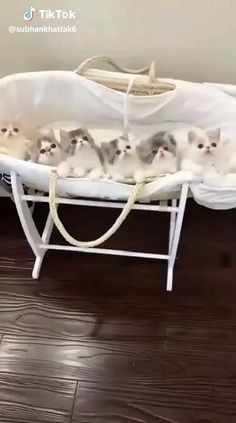 Cute cats and kittens lover, know and read here about your cute cats, cute kittens, newborn kittens, and cute baby cats. Kittens And Puppies, Baby Kittens, Cute Cats And Kittens, Kittens Cutest, Cute Cat Gif, Cute Funny Animals, Cute Baby Animals, Gato Animal, Gato Gif