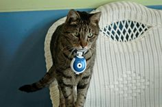 Cats, Cute Cats, pretty kitties, pet photography, cat photography, The Patricia H. Ladew Foundation, calendar, cat collage, cat camera