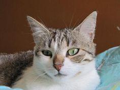 Alya, femelle, née en 2008. Rescue Association Protection féline Bretagne (adoption chat)