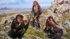 Uit een studie van de beenderen van Australopithecus africanus blijkt dat deze voorouder van de mens zijn handen op dezelfde manier kon gebruiken als moderne mensen.