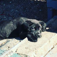 GreenArtstore, Athens Greece. Leuki dog