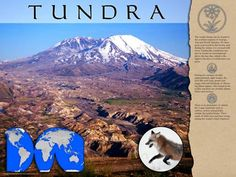 Poster: Tundra Biome - Pictures and text describe the tundra biome that extends across the northern regions of North America, Europe and Asia. Includes a world map. Process Of Change, Biomes, Ecology, Mount Rainier, North America, Environment, Asia, Europe, Activities