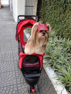 Cadelas possuem carrinho de bebê para passear (Foto: Elke Blodorn / Arquivo Pessoal)